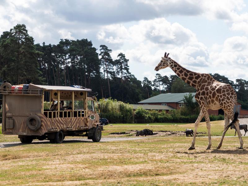 Geführte Tour durch die Serengeti-Safari (VIP-Jeep-Safari / Dschungel-Safari-Tour)